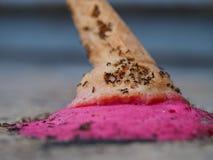 Formiche sul gelato sul pavimento fotografie stock