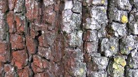 Formiche sul tronco di albero stock footage