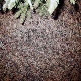 Formiche sulla terra con una misura fotografie stock libere da diritti