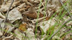 Formiche sulle foglie secche Fine in su video d archivio