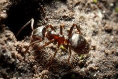 Formiche vicino ad un anthil fotografia stock