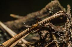 Formiga, animais, macro, inseto, artrópode, natureza, invertebrado fotografia de stock royalty free