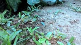 A formiga da colônia é movimento vídeos de arquivo
