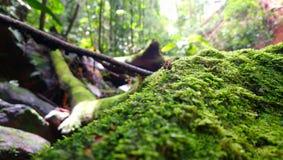 Formiga do explorador na selva imagens de stock