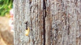 A formiga e o ovo Imagem de Stock Royalty Free
