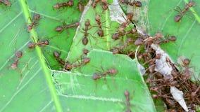 A formiga está reparando ninhos vídeos de arquivo