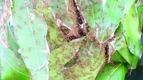 A formiga está reparando ninhos video estoque