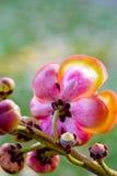Formiga na flor Foto de Stock