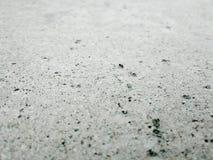 Formiga pequena que anda na pedra Imagem de Stock
