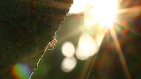 Formiga que escala na árvore com luz solar filme