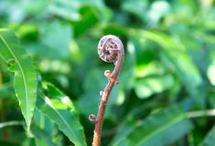 Formiga que rasteja acima de uma haste da samambaia Fotografia de Stock