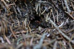 A formiga saiu da casa imagens de stock