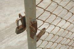 Formiga vermelha na cerca Imagem de Stock Royalty Free