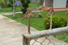 Formiga vermelha na cerca Fotografia de Stock Royalty Free