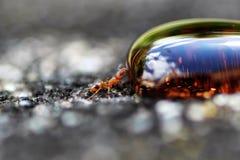 Formiga vermelha pequena que bebe uma gota do xarope foto de stock royalty free