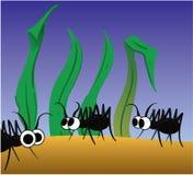 Formigas Foto de Stock Royalty Free