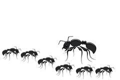 formigas Imagens de Stock Royalty Free