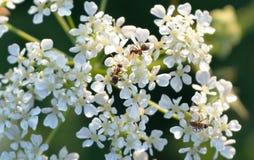Formigas contra plantas Imagens de Stock Royalty Free