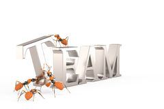 Formigas da cooperação e da colaboração dos trabalhos de equipa que constroem o texto de aço Imagem de Stock Royalty Free