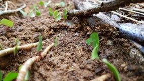 Formigas das formigas das formigas Fotografia de Stock