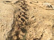 Formigas de exército fotos de stock royalty free