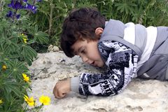 Formigas de observação do rapaz pequeno Foto de Stock Royalty Free