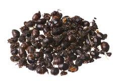 Formigas de voo roasted comestíveis isoladas no fundo branco fotografia de stock royalty free