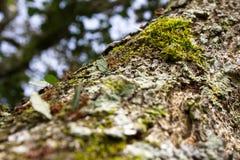 Formigas do cortador da folha Imagens de Stock