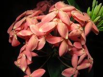 Formigas e flores Foto de Stock