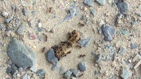 Formigas em Caterpillar inoperante vídeos de arquivo