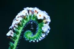 Formigas, formigas em uma flor Imagem de Stock Royalty Free