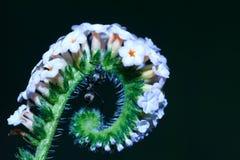 Formigas, formigas em uma flor Fotos de Stock Royalty Free