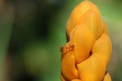 Formigas na flor Foto de Stock