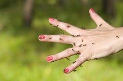 Formigas na mão imagens de stock royalty free