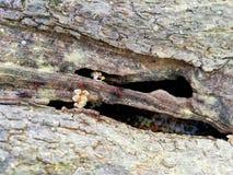 Formigas pequenas duramente de trabalho foto de stock royalty free