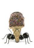 Formigas pretas que carreg o cone de gelado Fotografia de Stock Royalty Free