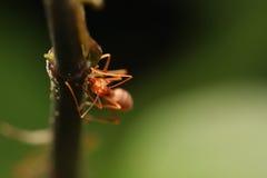 Formigas que andam em um ramo foto de stock royalty free