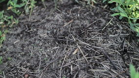 Formigas que rastejam no anthill vídeos de arquivo