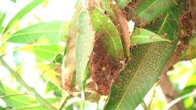 Formigas que tentam construir ninhos vídeos de arquivo