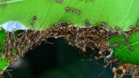 Formigas que tentam construir ninhos Nenhum som video estoque