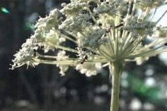 Formigas sobre uma flor filme