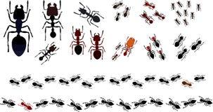 Formigas tropicais e subtropicais Foto de Stock Royalty Free