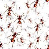 Formigas vermelhas Fotos de Stock