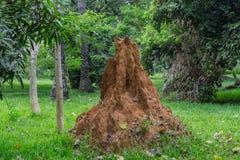 Formigueiro como visto em um jardim Imagens de Stock