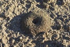Formigueiro na terra Foto de Stock Royalty Free