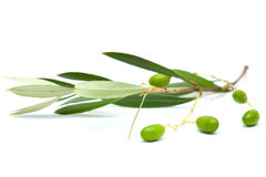 Forming olives Royalty Free Stock Photo