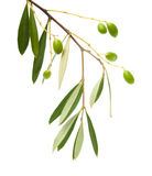 Forming olives Royalty Free Stock Photos