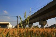 Estrada de ferro sob os campos de trigo Fotografia de Stock Royalty Free