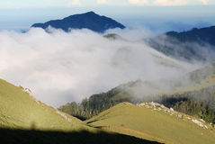 formosan βουνό sambar Στοκ φωτογραφία με δικαίωμα ελεύθερης χρήσης
