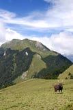 Formosan sambar and mountain Stock Photography